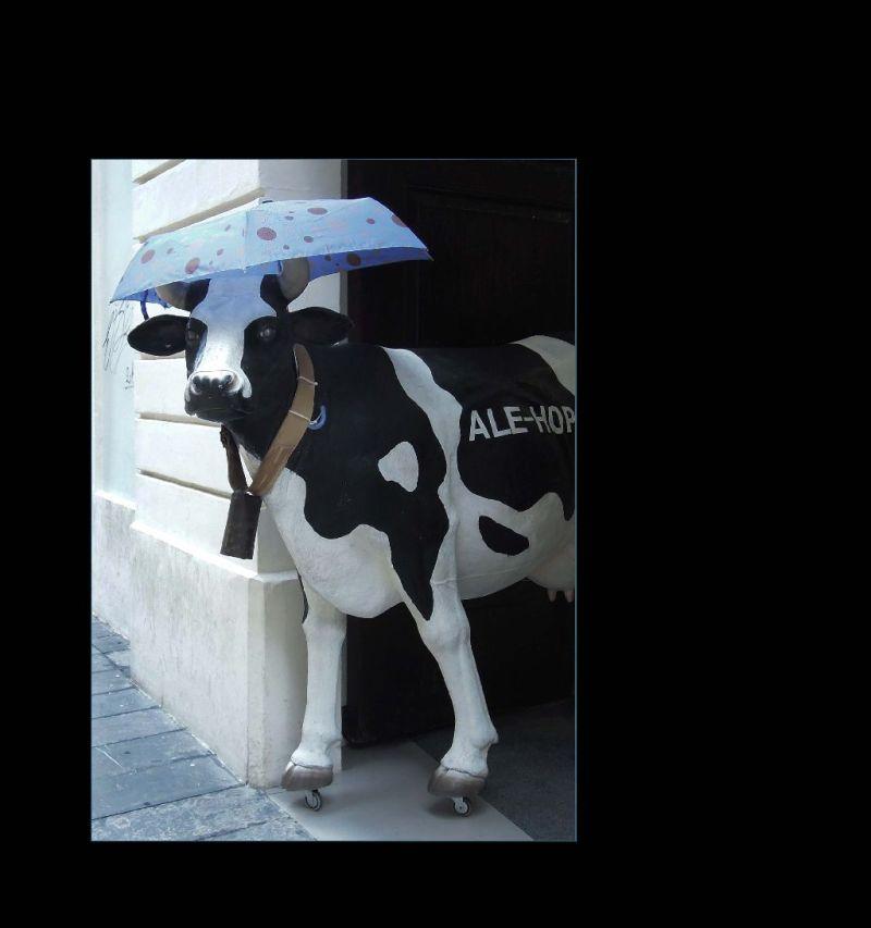 Rainy Day at The Shop Entrance