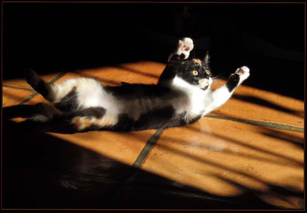 Kittens in The Sunny Place