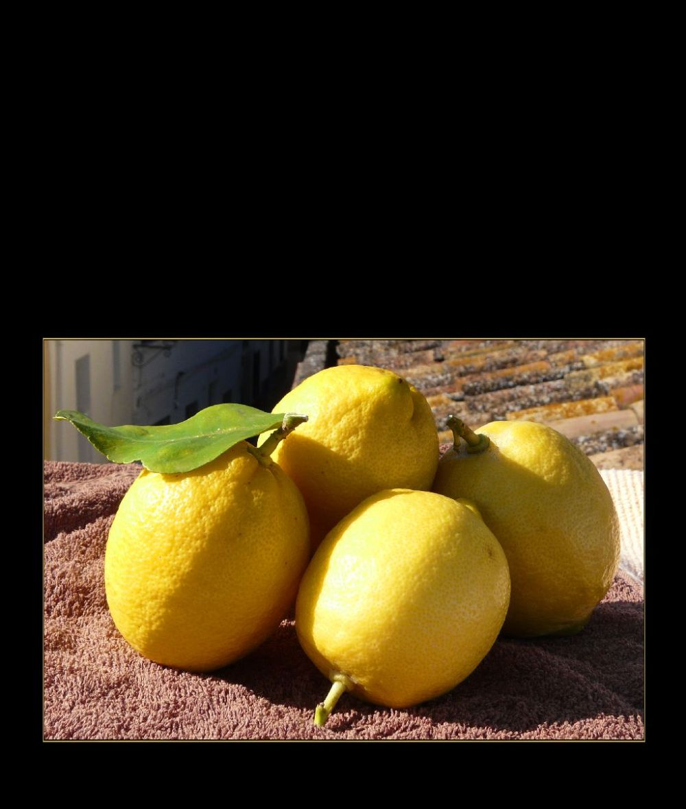 Freshly Picked Spanish Winter Lemons