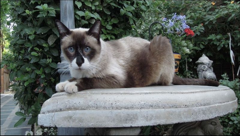 Sammy in The Garden Terrace