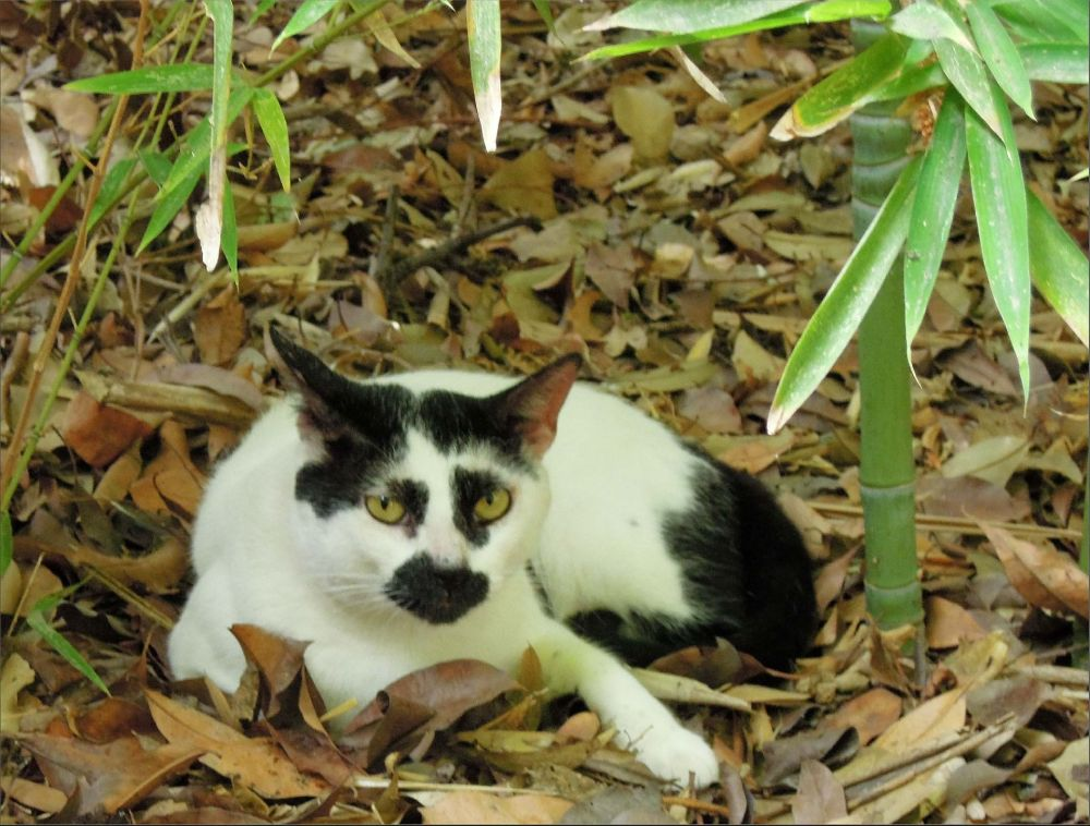 Cat in The Bamboo Grove Ⅱ