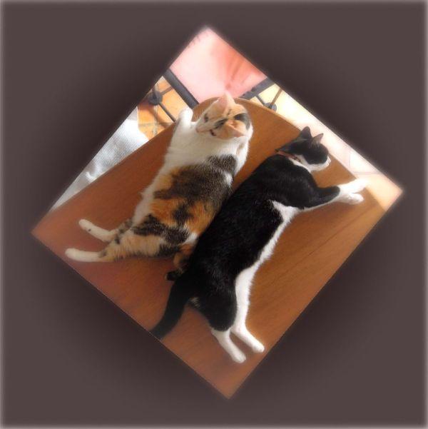 Gimo&Felix
