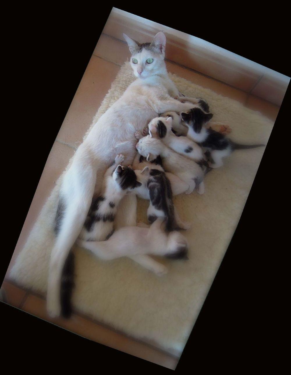 Lactation-Rola & 9 Baby Kittens