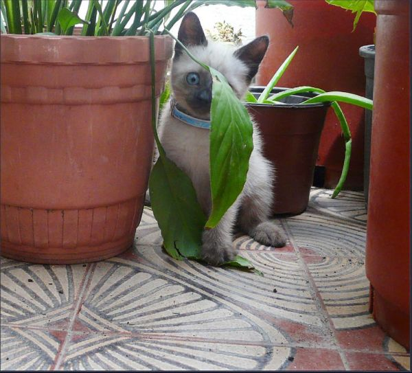 Chato in The Plant House