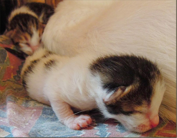 Sleeping Baby Kittens