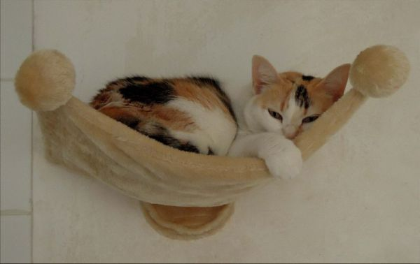 Gimo - Sleeping in a Hammock.