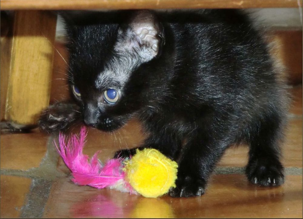 Koko's New Toy