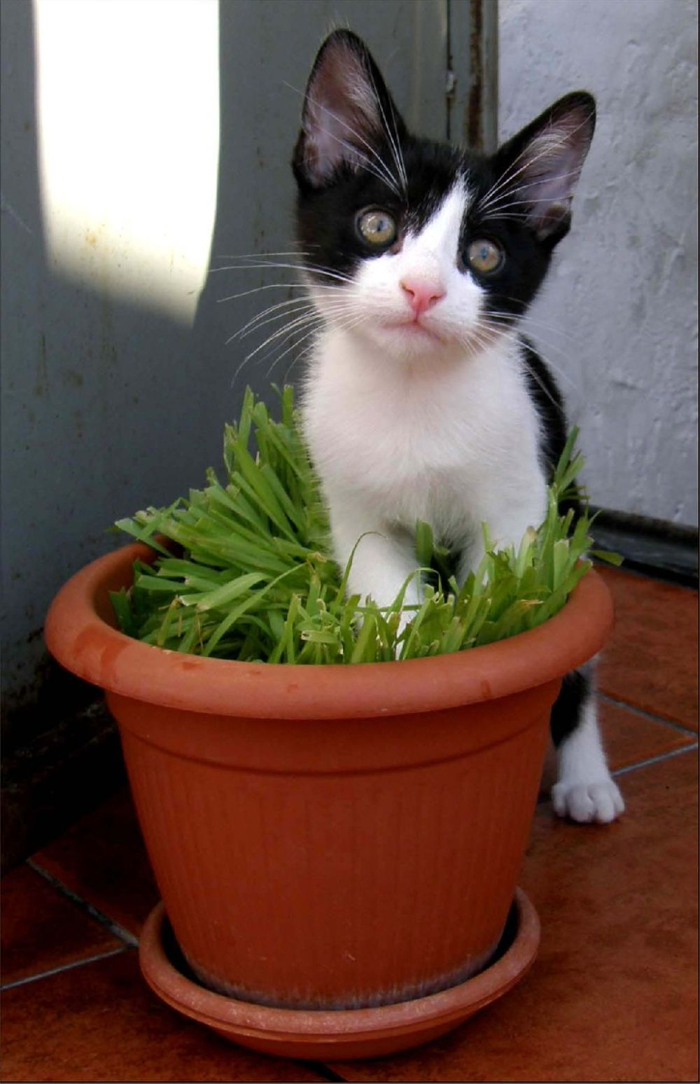 Ace and Cat Grass