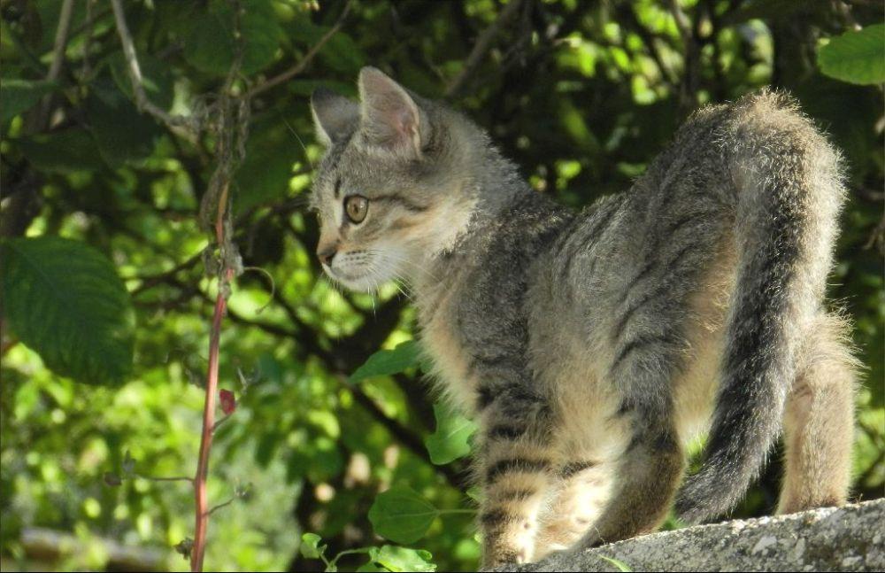 kitten's Curiosity