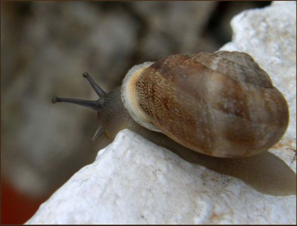 Traveling Snail