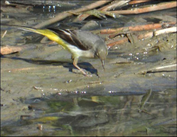 Small bird at the Brook