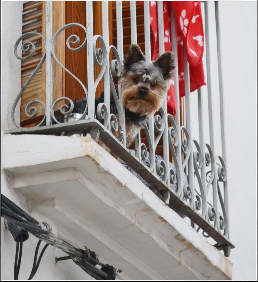 A Dog in The Balcony