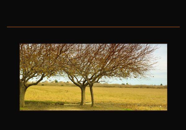 Winter of The Grassy Plain