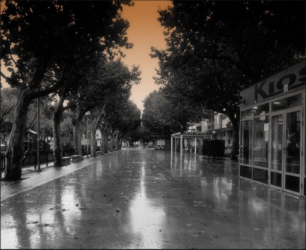 Paseo Just After Rain