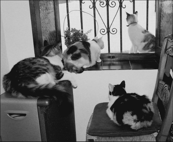 Cats by The Window