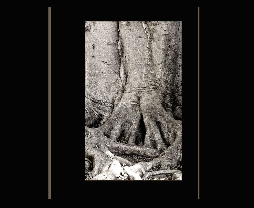 Root of The Giant Tree