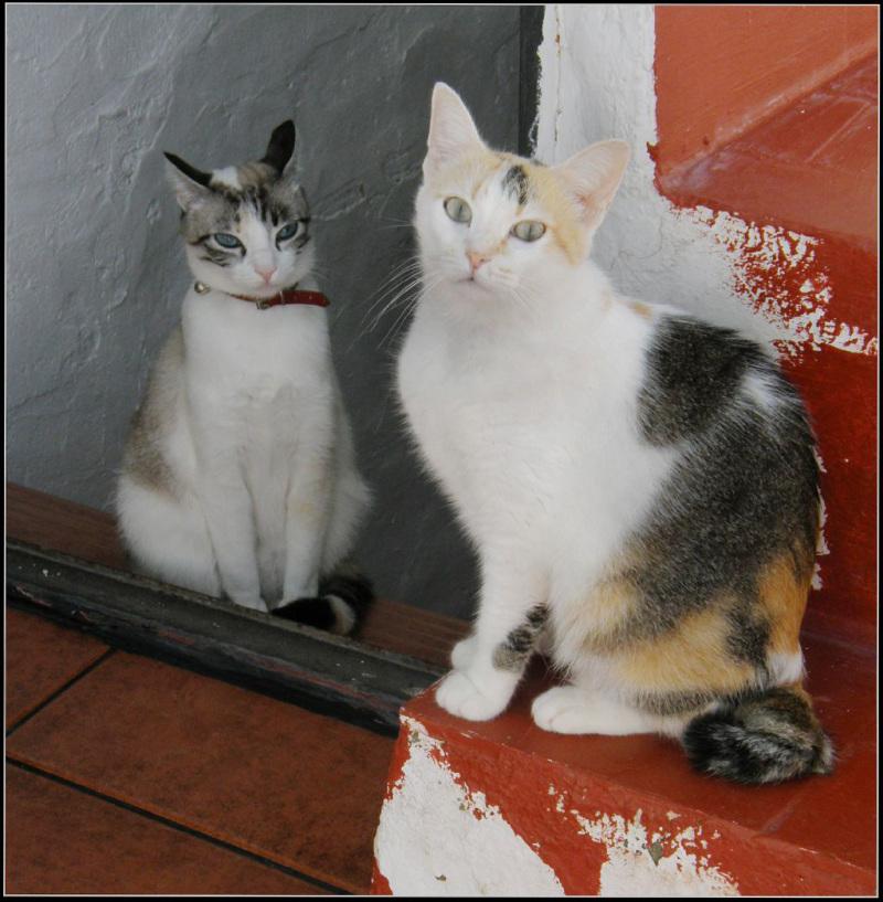 Gimo & Coco