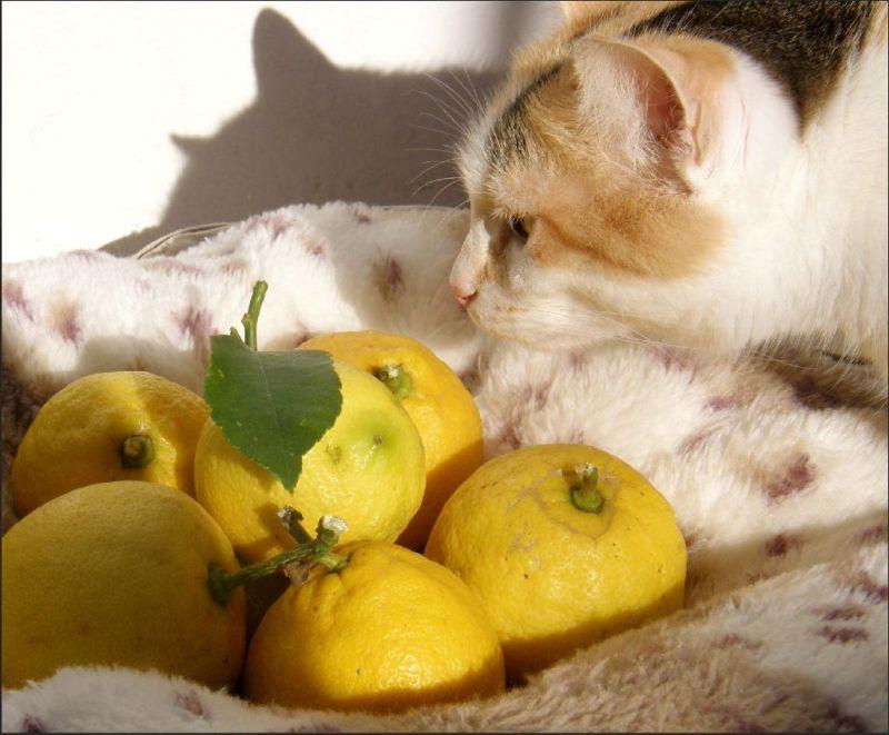 Gimo  & Fresh Lemons