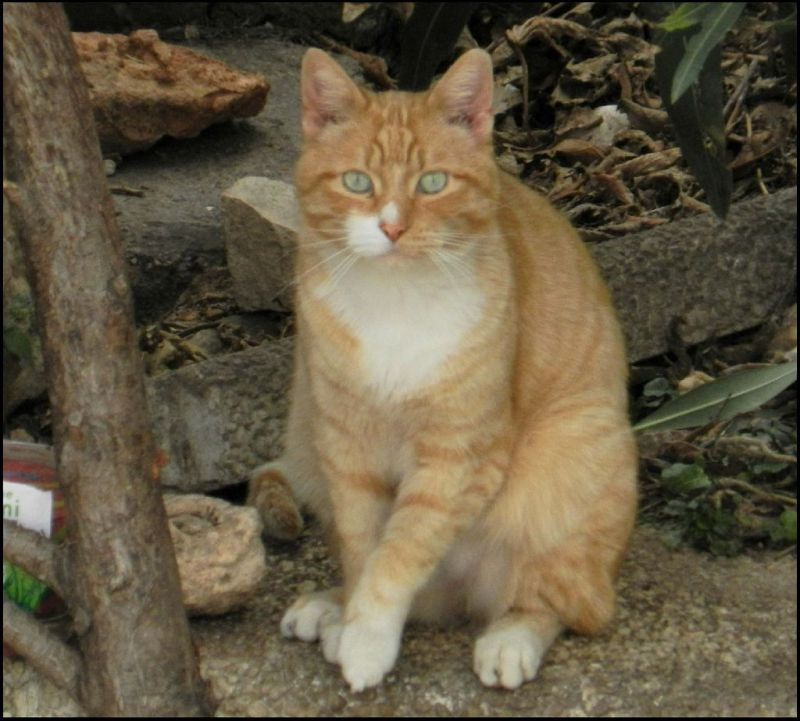 Ginger Cat at St. Anna