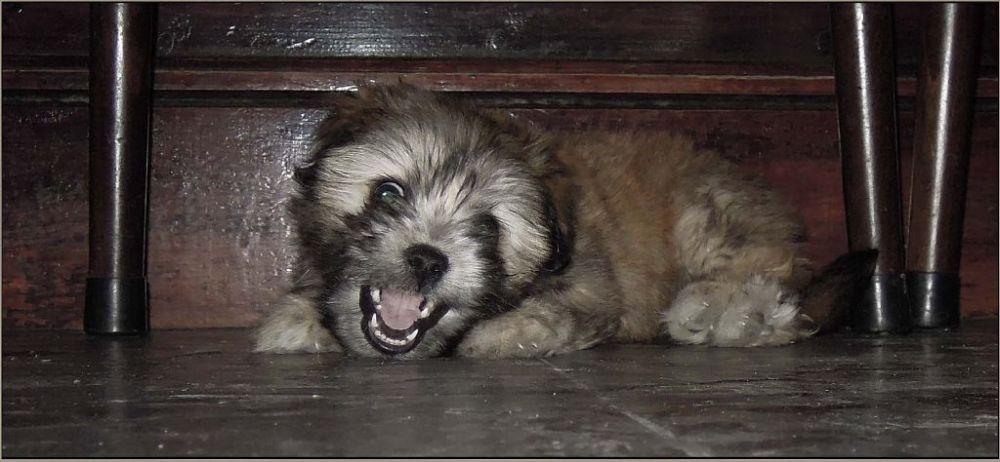 Playaful Puppy