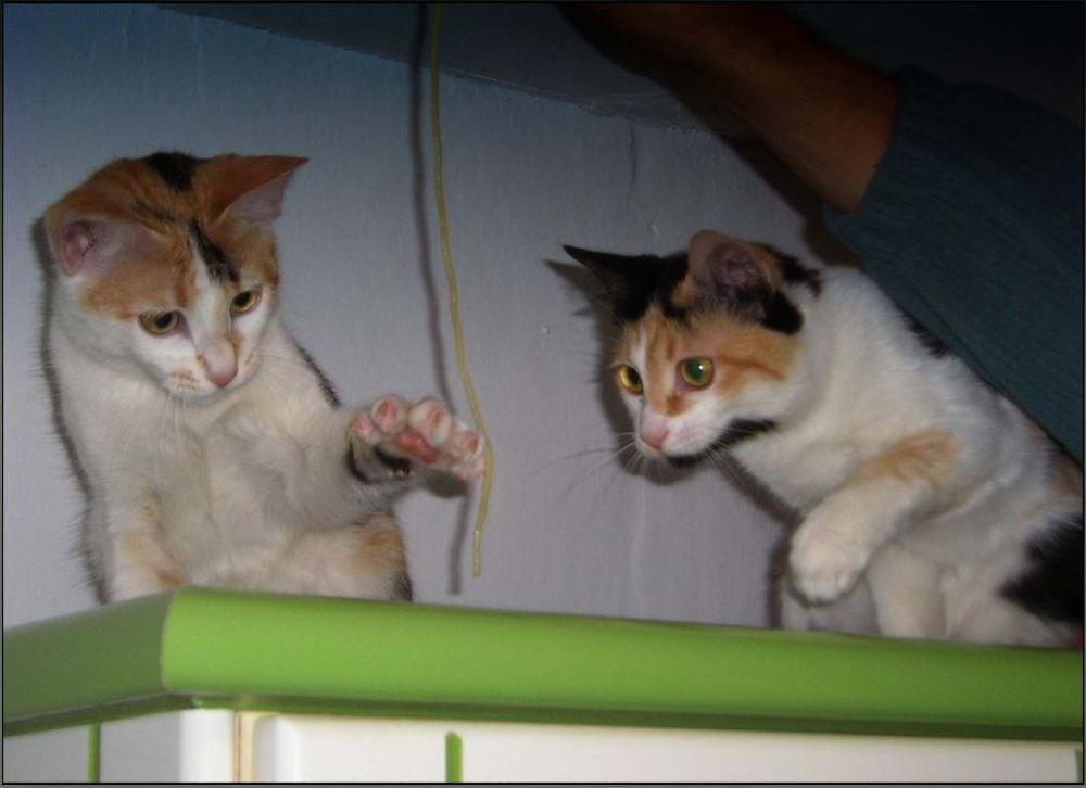 Gimo and Jodi's Curiosity