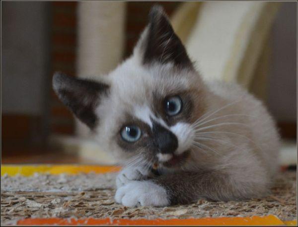 Xena on The Cat Scratch Board
