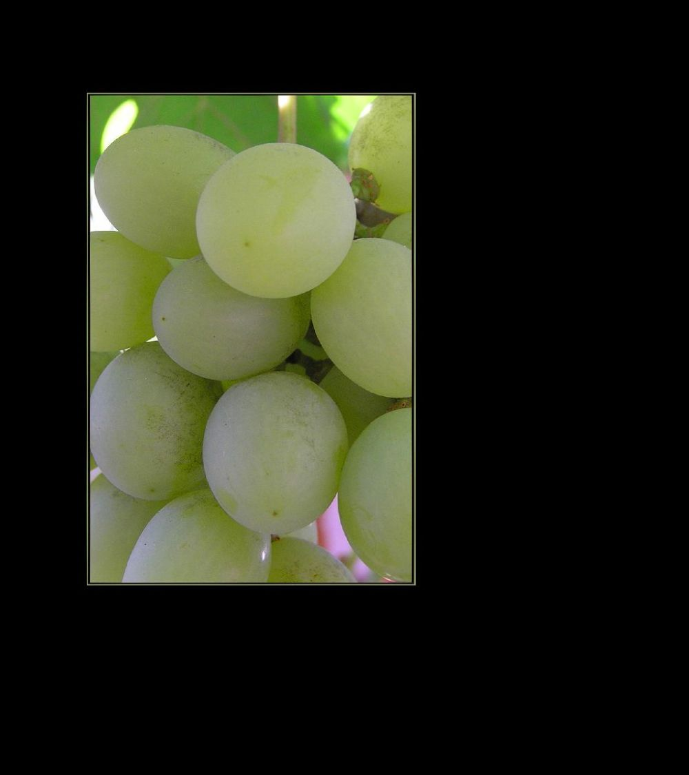 Spanish Table Grapes