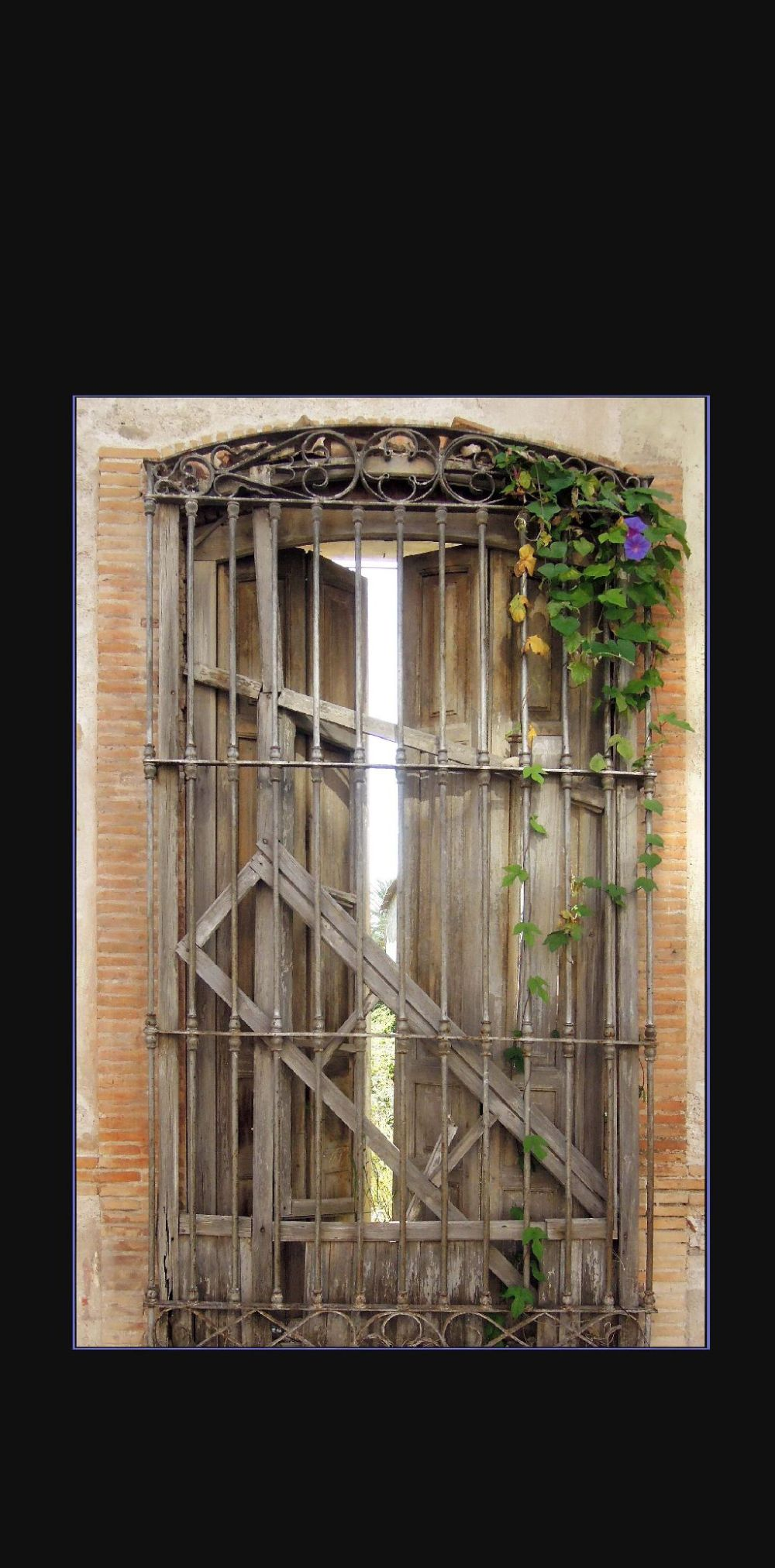 Rotten French Window & Morning Grories