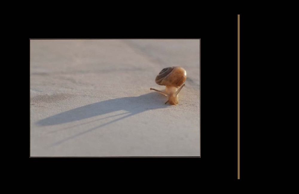 Baby Snail