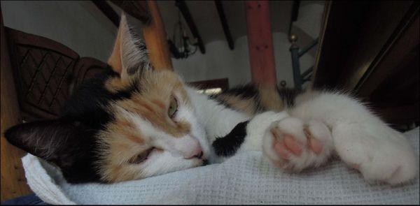 Sleepy Face - Jodi