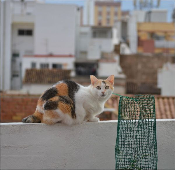 Gimo at The Roof Terrace