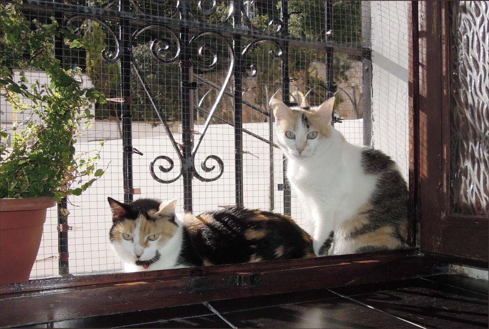 Gimo & Jodi at The Sunny Place by The Window