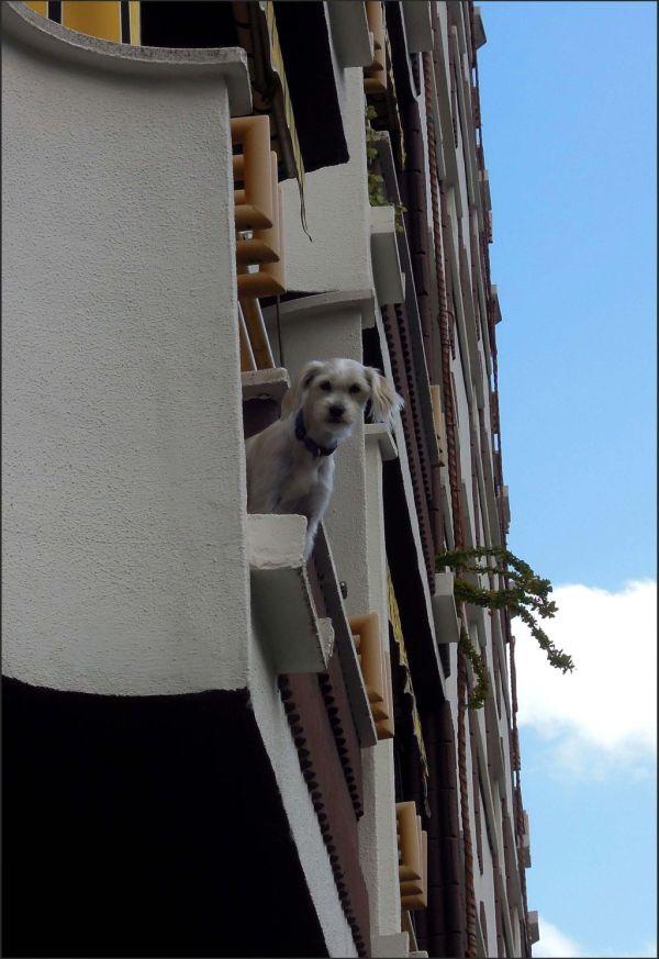 Dog at The Balcony