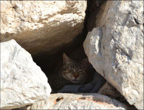 Cat in The Rock Crannies