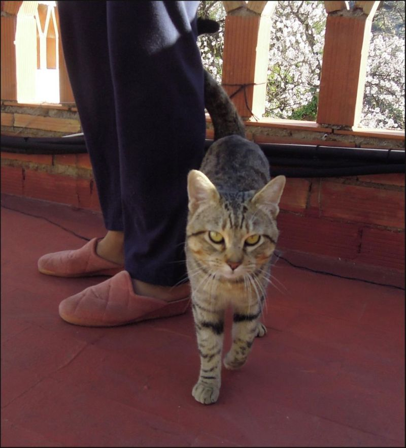Friendly Cat