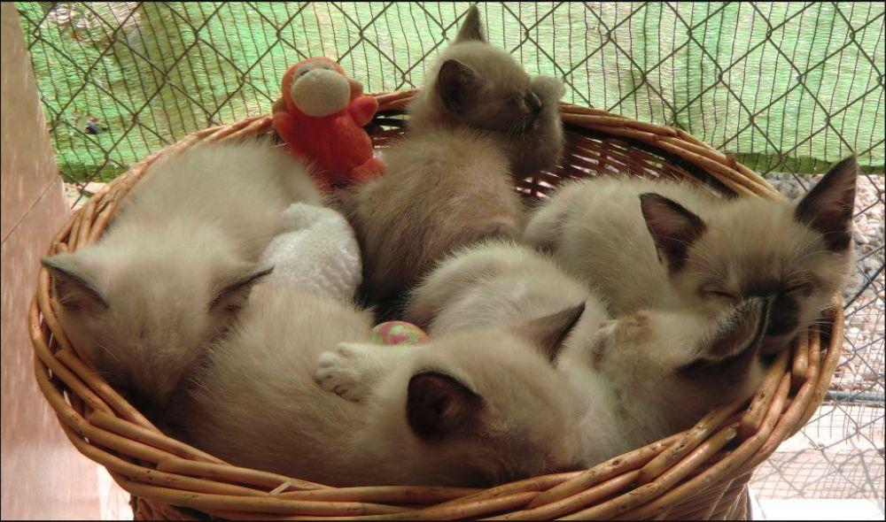 Siesta Time Kittens