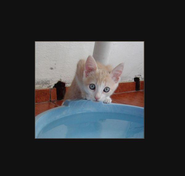 Denis The Boy Kitten