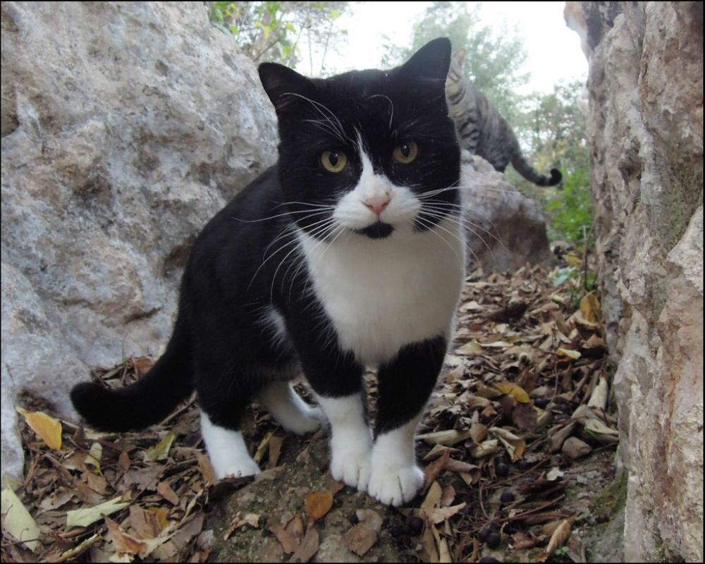 Cat at The St. Ana Mountain