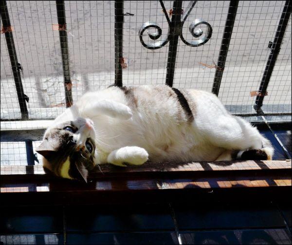 Coco Enjoys Lying in The Sun