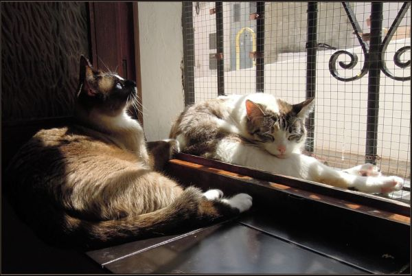 Coco & Xena in The Sunny Place