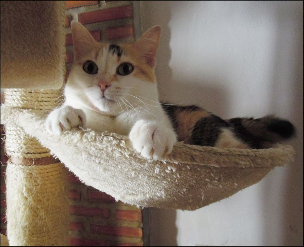 Gimo in the Cat Tower Bed