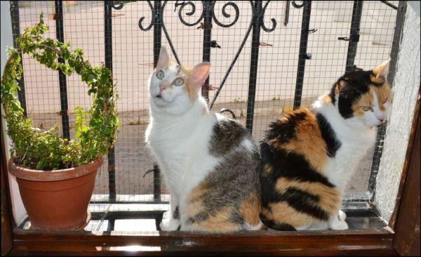 Birthday Cats Gimo & Jodi