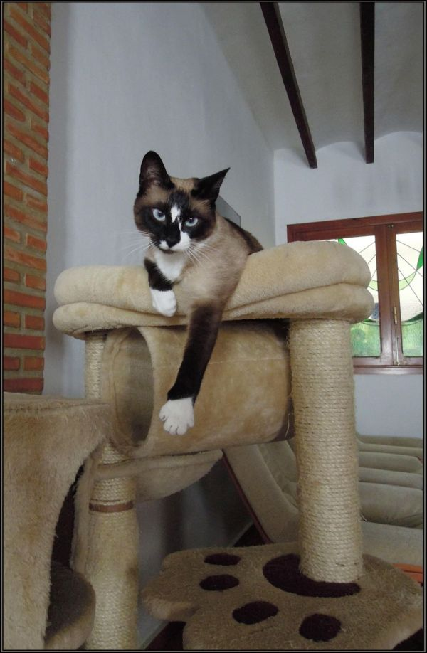 Xena in The Cat Tower
