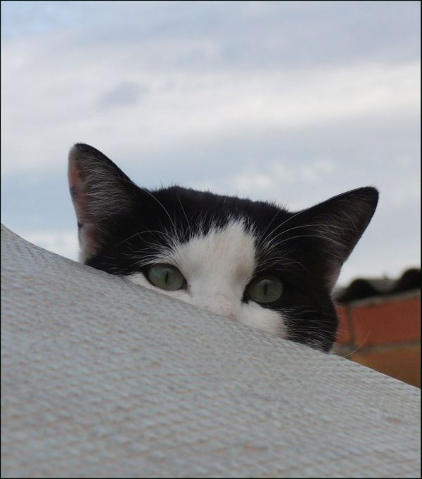 Stray Cat on The Roofterrace