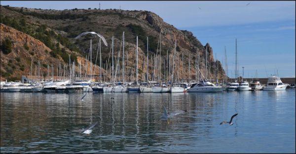 Seagulls at The Javia Yacht Harbor