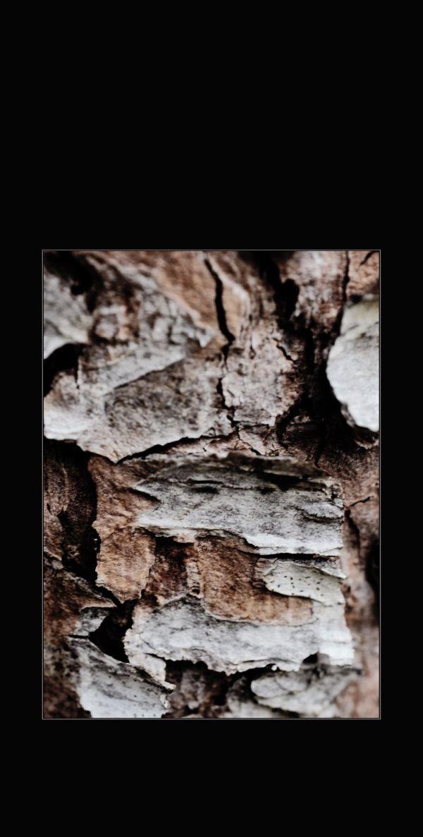 Pine Tree Surface