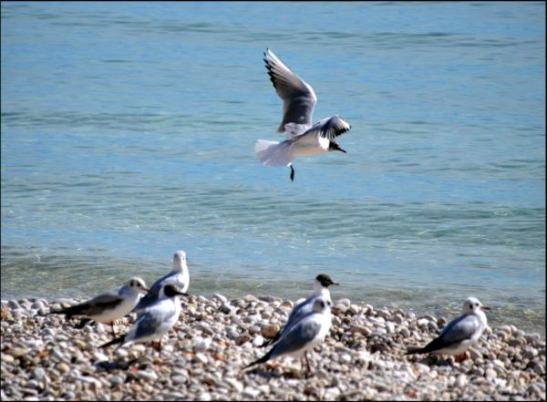 Seagulls at The Jávea Beach