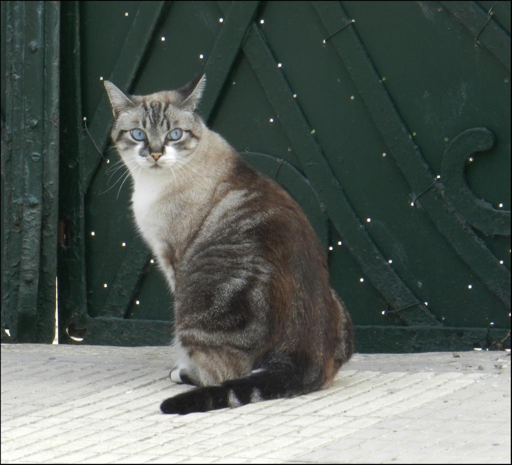 Neighboring Cat