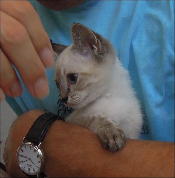 Our New Family - Kitten Kirin