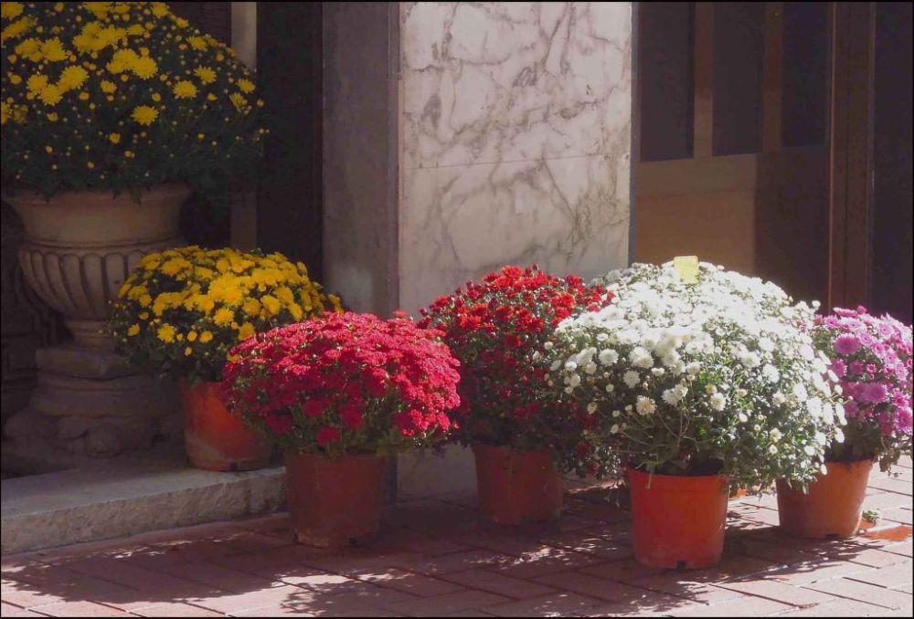 Seasonal Flower ‐ Small Chrysanthemums